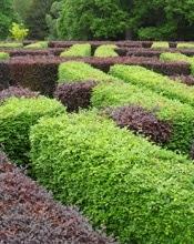 haie-de-hetre-verte-ou-rouge - cloture-jardin.be